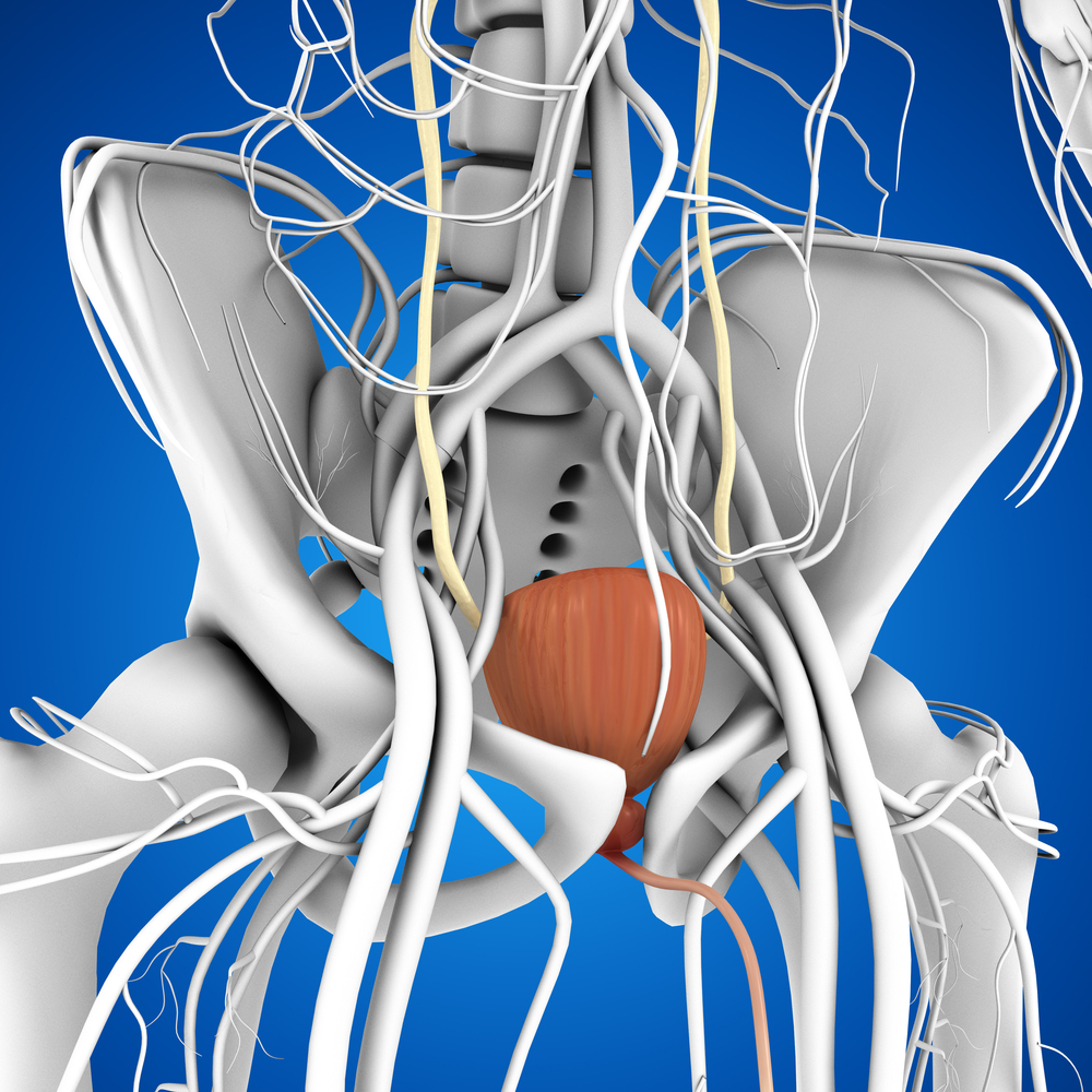 Cartoon of bladder and pelvis